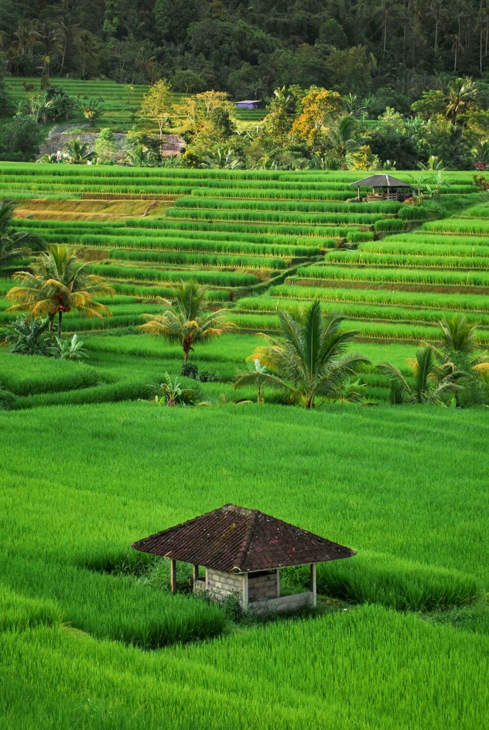 Best places in Bali to take amazing Instagram pictures